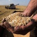 На Житомирщині начальник дільниці сільгоспвиробництва філії одного з товариств на продажі чужого зерна заробив понад 815 тис грн