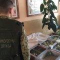 Под Житомиром украинец пытался контрабандой пронести в Беларусь 150 попугаев
