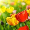 Погода в Житомирі 9 квітня
