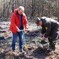 На Олевщині висадили гектар лісу