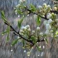 Які області заллють дощі: синоптики дали прогноз на понеділок