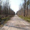 Житомирські лісівники щороку відновлюють та ремонтують лісові дороги