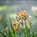 Прогноз погоди в Житомирі на 17 квітня