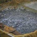 У Бердичівське водосховище вселять майже 4 тонни риби