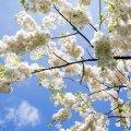 Прогноз погоди в Житомирі на 19 квітня