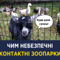 Чим небезпечні контактні зоопарки