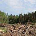У Лугинському районі директора лісового господарства визнано винним в адмінпорушенні, пов'язаному з корупцією