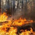 В області триває ліквідація пожеж в лісових масивах на території Овруцького та Олевського районів
