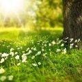 26 апреля: какой сегодня праздник и что нельзя делать