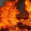 На Житомирщині ліквідувал масштабну пожежу на території лісництва
