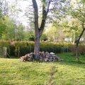 """У Житомирі в парку розпочали працювати над """"Зеленим лабіринтом"""". ФОТО"""