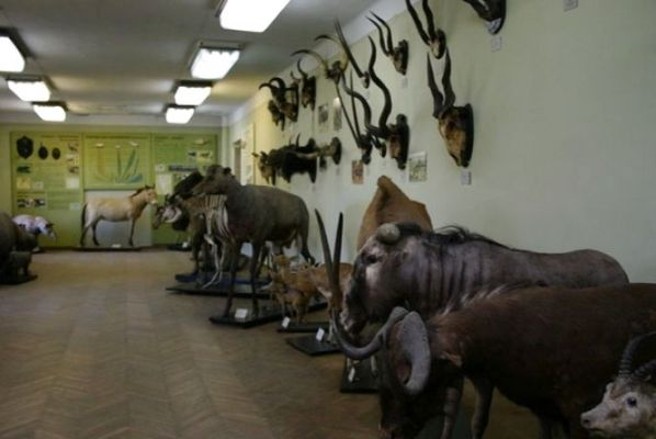 Колекцію житомирського музею природи започаткували ще в далекому 1865 році. ФОТО