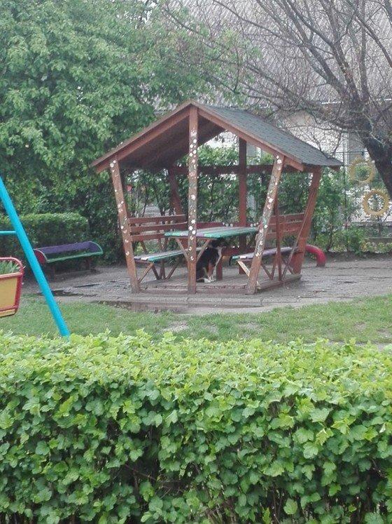 Житомиряни скаржаться на агресивних собак на території дитсадка
