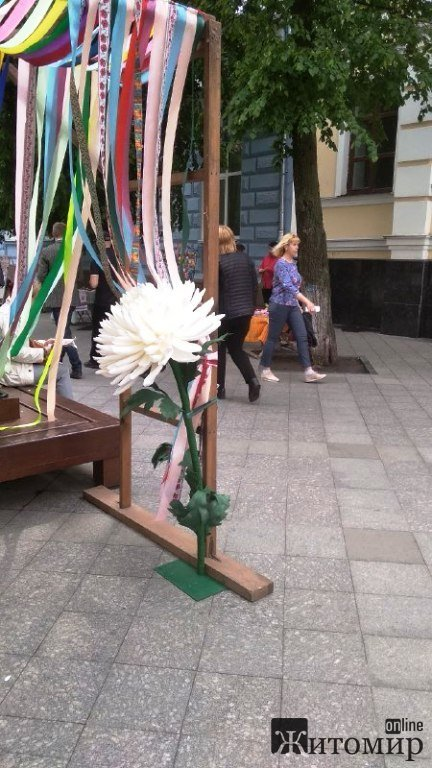 Житомир святкує День вишиванки. ФОТО