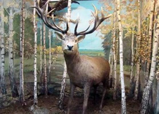 Музей флори і фауни в Радомишлі відомий не тільки серед жителів міста, але і України. ФОТО