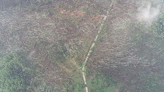 За лічені хвилини «знесло» 100 га лісу: Житомирщиною пройшовся потужний смерч. ФОТО. ВІДЕО