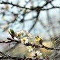 Погода в Украине: синоптики прогнозируют потепление с 2 мая