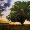 Сьогодні вдень 10 травня у м. Житомирі та області хмарна погода з проясненнями без істотних опадів