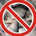 На водоймах Житомирщини до 30 червня діє заборона на лов риби