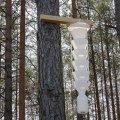 В лісах Народицького лісгоспу для шкідників розвісили пастки