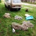 На Житомирщині браконьєри ігнорують заборону на вилов риби