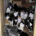 Киевлянка приютила в своей квартире почти сотню котов