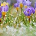 Якою ж буде погода в Житомирі 16 травня