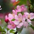 Завтра вдень 17 травня у Житомирі та області очікується хмарна погода з проясненнями