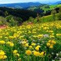 Якою ж буде погода в Житомирі на вихідних?