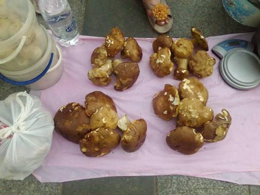 На Житньому ринку в Житомирі почали продавати білі гриби. ФОТО