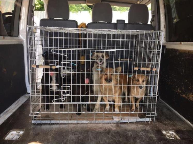 У Новограді з початку червня безкоштовно простерилізували більше сотні безпритульних собак