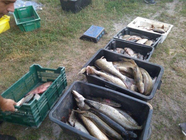 В Брусилівському районі незаконно виловили риби більш ніж на 40 тисяч гривень