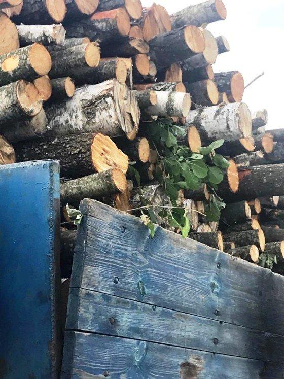 На Житомирщині знову вивозять лісопродукцію без документів