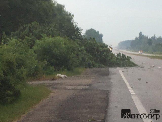 У селі Іванівка негода повалила на трасу дерево. ФОТО