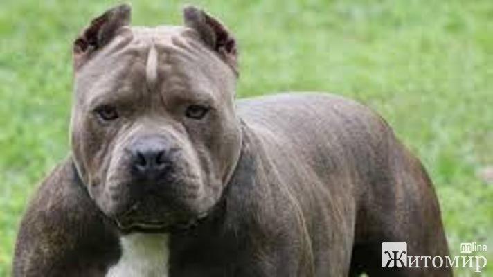 У Житомирі в районі Паперової фабрики жінку покусав розлючений пес. ФОТО. ВІДЕО
