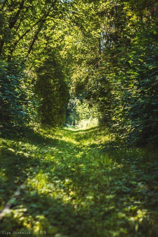 У Новограді є свій Тунель кохання. ФОТО