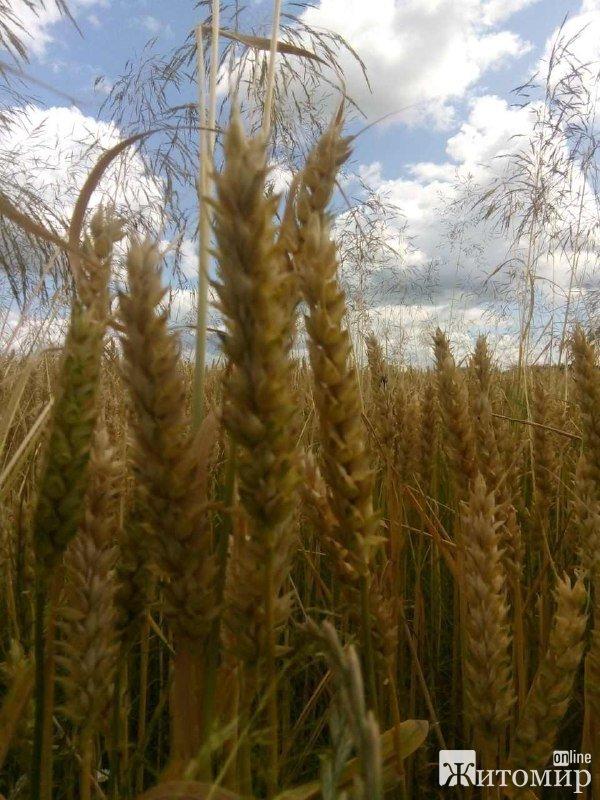 Літні пейзажі околиць Житомира. ФОТО