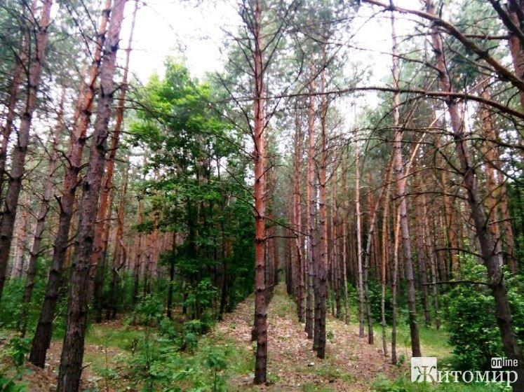 Живописні околиці Кмитова у теплі літні дні. ФОТО