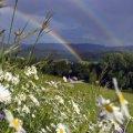 Якою ж буде погода в Житомирі 5 червня?
