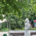 У Новограді розшукують квіткових крадіїв?