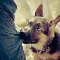 """В """"Центрі захисту тварин"""" розповіли, чому нападають собаки та як цього уникнути"""