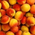 Врачи назвали самые полезные «летние» фрукты и овощи
