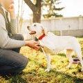 19 жестів, якими собаки спілкуються з людьми