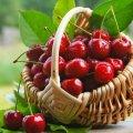 Шовковиця, вишня, черешня: Чим корисні літні ягоди?