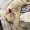 На Крошні невідомі застрелили бездомну кішку