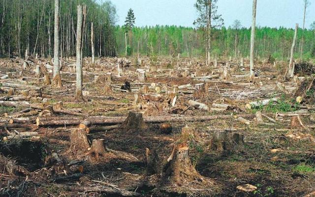 Кандидат, що вимостив дорогу до депутатства нашим лісом