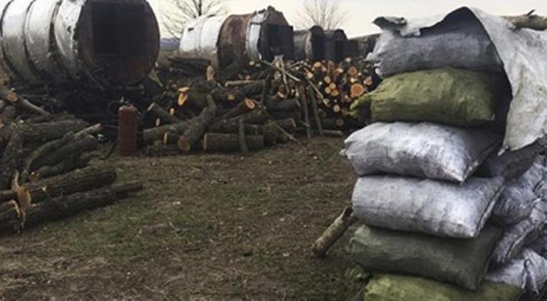 Рубай, продавай і заробляй:  корупція в лісгоспах Житомирщини