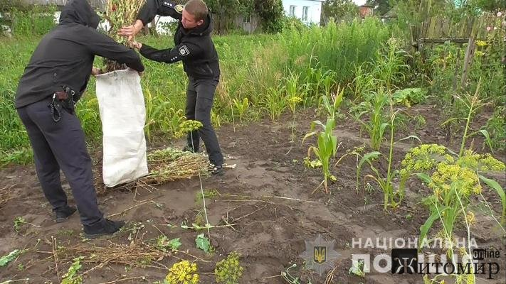 Поліція Житомирщини вилучила близько 400 рослин снодійного маку та ще півсотні – коноплі