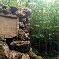 Унікальна ботанічна пам'ятка природи Житомирщини. ФОТО