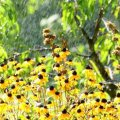 Жара и холод в августе: какой будет погода до конца лета